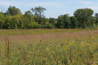Photo: The area contains a mix of tall prairie and woodland.