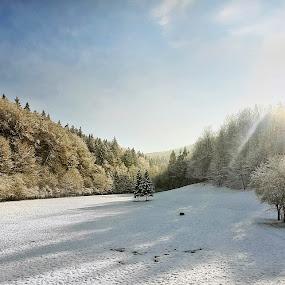 by Gregor Znidarsic - Landscapes Mountains & Hills ( snow sun tree forrest )