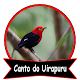 Canto do Uirapuru Passaro Download on Windows
