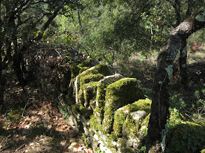 Photo: ... and by mossy stone walls.