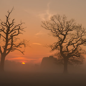 sunrise by Marek Kuzlik - Landscapes Sunsets & Sunrises ( uk, fog, oak, sunrise, landscape, kuzlik, mist,  )
