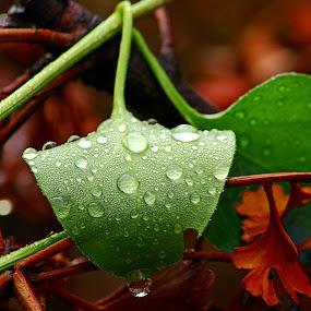 In the Rain by Greg Van Dugteren - Nature Up Close Leaves & Grasses