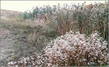 Photo: 2011.10.05 - din zona Durgau, fostul lac Carolina