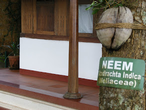 Photo: Neem is the medicine box of India