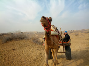 Photo: The return trip the next morning was by cart.  I think all the guys were thankful not to have a second day of camel riding.