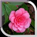 Camellias Live Wallpaper
