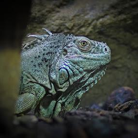 Dragonworld by Mathias Ahrens - Animals Reptiles