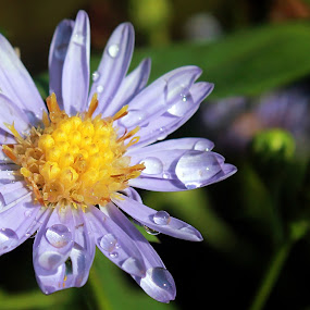 after the rain by Dhannie Setiawan - Nature Up Close Gardens & Produce ( blue, green, nature up close, yellow, garden, rain, flower, pwcflowergarden-dq )
