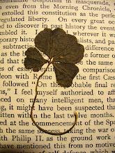 Photo: A four-leaf clover found in S.T. Coleridge's Biographia Literaria (printed 1917).