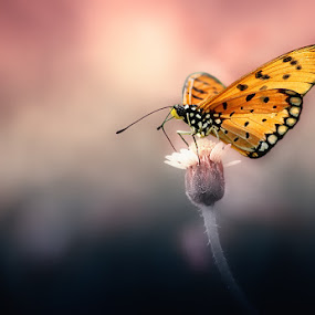 fly to dreamland  by Angga Putra - Animals Insects & Spiders ( butterfly )