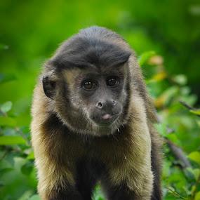 Take a picture of me, please by Zeljko Kliska - Animals Other Mammals ( mammals, animals, zoo, nature, monkey,  )
