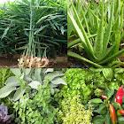Plantes médicinales icon
