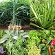 Medicinal plants apk