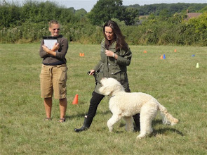 Photo: Kerry and Alan Labradoodle preparing for the Contact Slalom walk