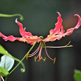 by Teresa Wooles - Flowers Single Flower