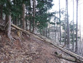 倒木を越える