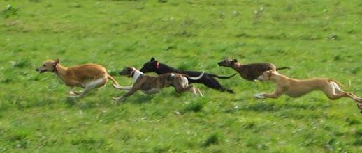Photo: 4 girls running after a sweet boy