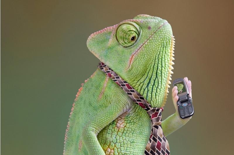 chameleon-contractor