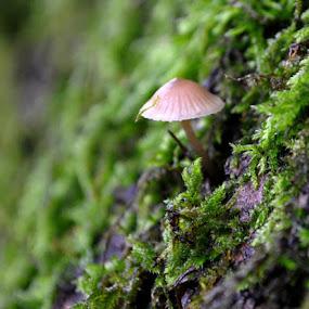 by Nataša Kos - Nature Up Close Mushrooms & Fungi