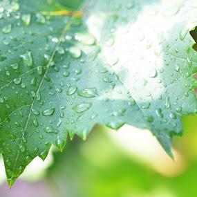 by Kris Van den Bossche - Nature Up Close Leaves & Grasses (  )
