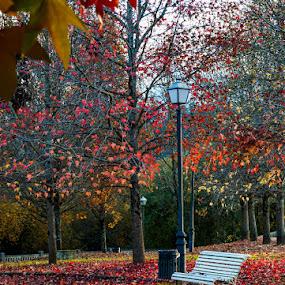 by Jose María Gómez Brocos - City,  Street & Park  City Parks ( red, park, tree, color, green, atumn, fall, trees, leaf, leaves )