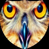 Sparkling owl Live Wallpaper