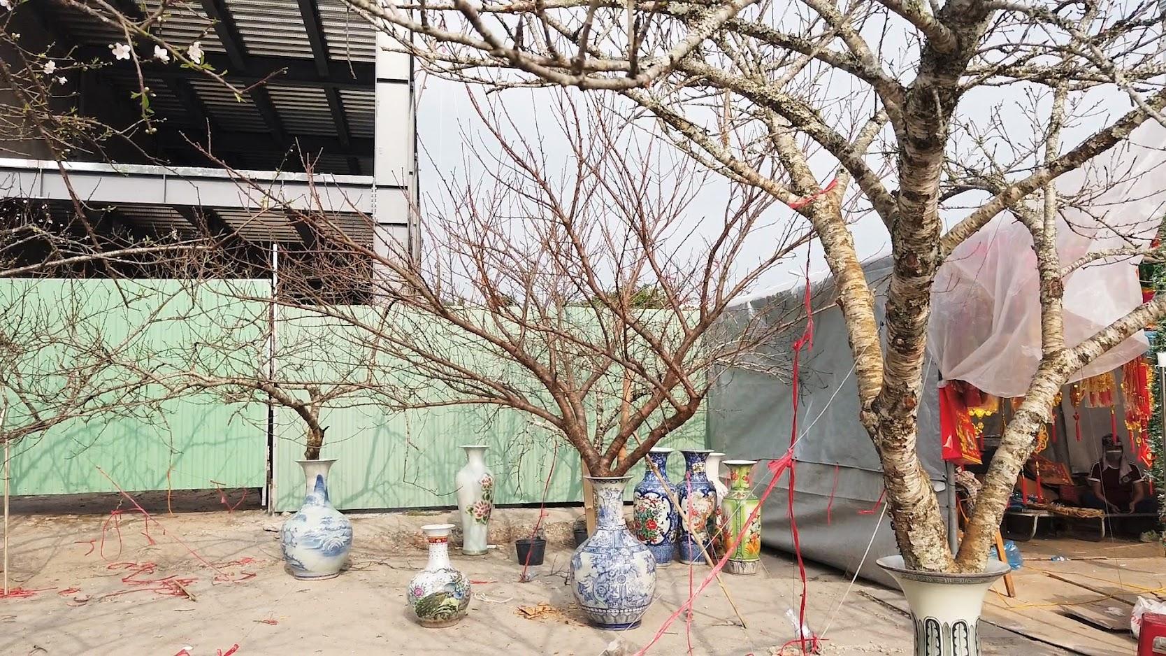 Chợ hoa Tết 2020 đường Lê Hồng Phong ở Hải Phòng 10