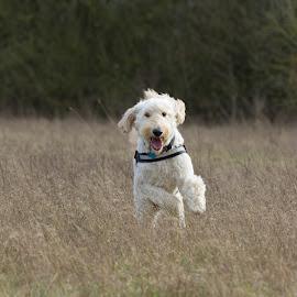 Happy Donald by Stuart Walker - Animals - Dogs Running