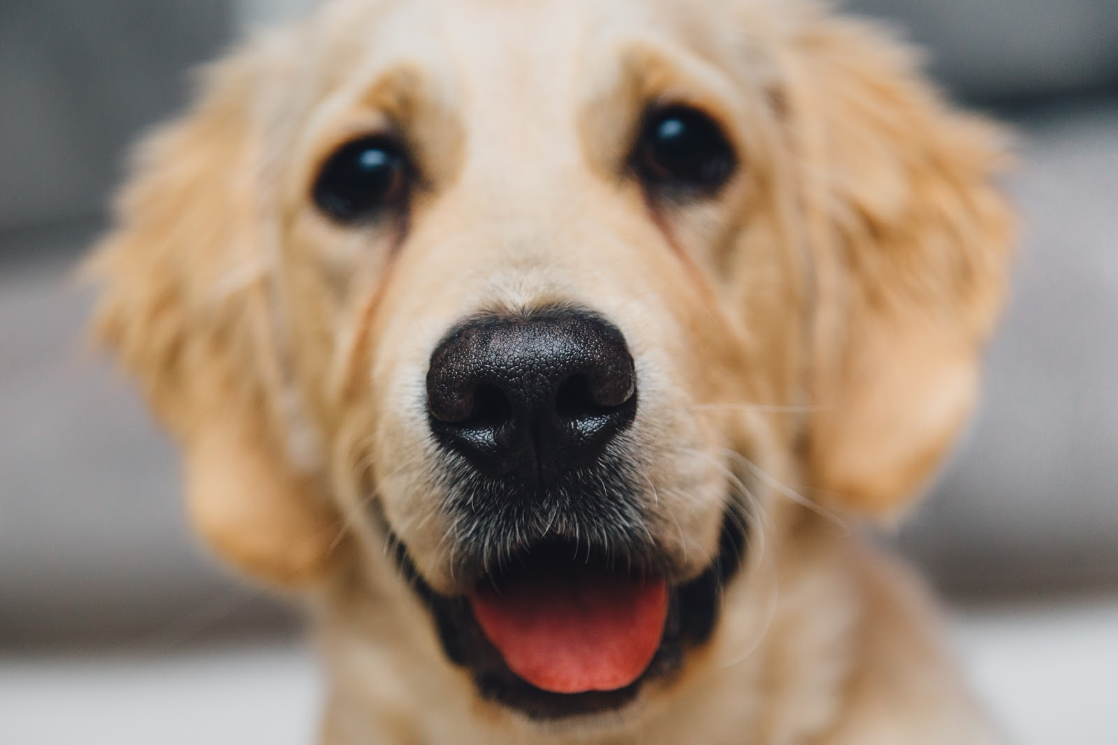 night-animal-dog-pet.jpg