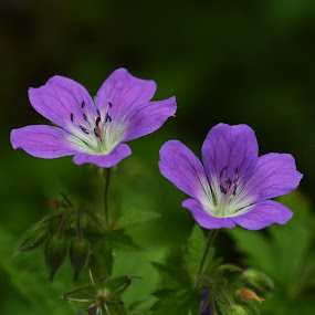 by Anngunn Dårflot - Flowers Flowers in the Wild