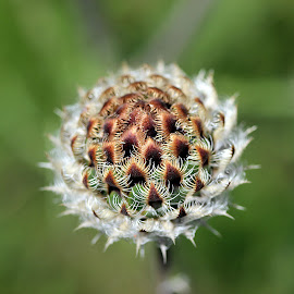by Biljana Nikolic - Nature Up Close Other plants (  )