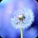 Dandelion HD Live Wallpaper icon