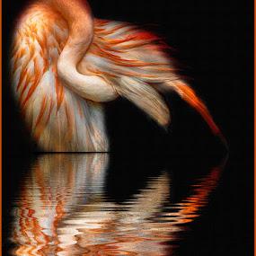 Pretty Flamingo by Katherine Rynor - Animals Birds ( bird, orange, reflection, digital art, flamingo )