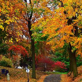 by Andrew Piekut - City,  Street & Park  City Parks