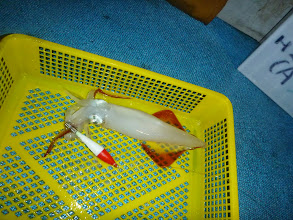 Photo: ぽつん、ぽつんと釣れてます。