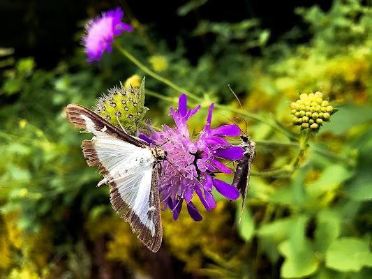 Un  fiore per due di alessio_bordenca
