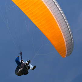 Parasail Landing by Sam Alexander - Sports & Fitness Other Sports ( may, lookout mountain, hangglider, 2014, parasail, colorado )
