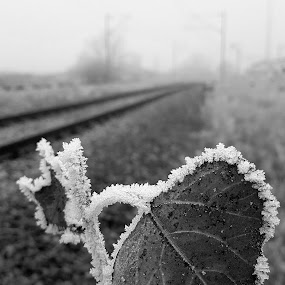 Nostalgia. by Marin Mavra - Black & White Flowers & Plants ( macrophotography, icy, macro photography, black and white, frost, nature close up, leaf, tracks, travel, blackandwhite, macro, winter, leafs, nature, delicate, frosting, nature up close, nostalgia, nostalgic, travel photography, frosty, frosted )