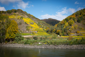 Photo: These vineyards are only possible along the river, where the sun is reflected back up the hills.