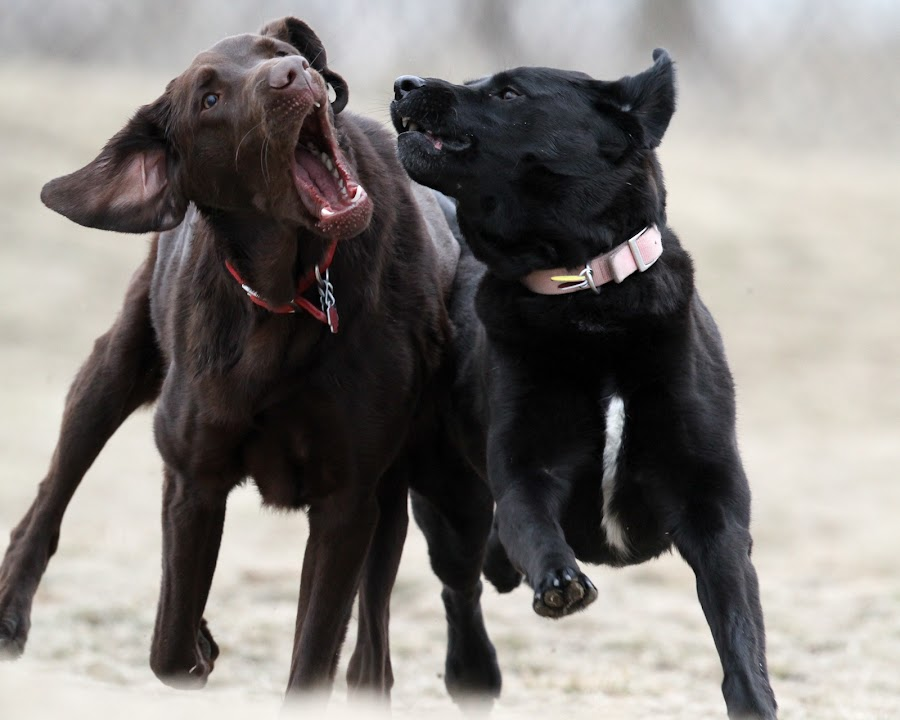 Closer Please by Peter M  - Animals - Dogs Playing