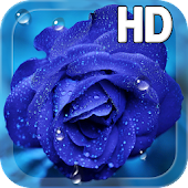 Blue Rose Drops LWP