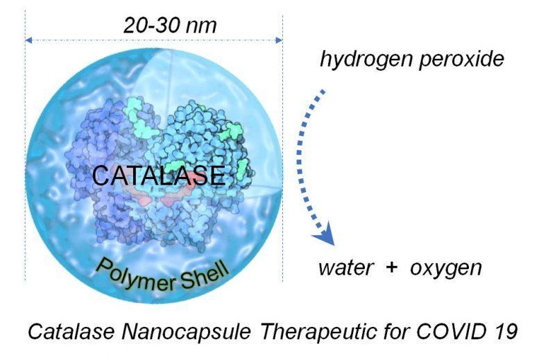Catalase COVID-19 Diagram