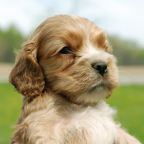 The Runt At Five Weeks by Stephen Beatty - Animals - Dogs Portraits