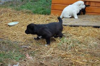 Photo: cuccioli 30gg