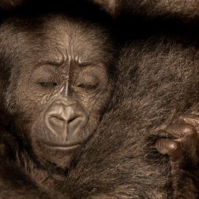 Cuddles with mum by Tracy Morris - Animals Other Mammals
