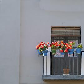Verandas by Joatan Berbel - Buildings & Architecture Architectural Detail ( spain, flowers, granada, andalucia, architectural detail, colorful, building, street photography )