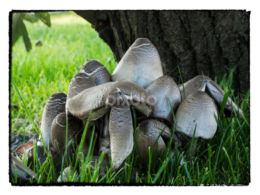 Signs of autumn by Radijsje VC - Nature Up Close Mushrooms & Fungi ( tree, autumn, green, low, mushrooms )