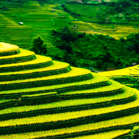 The season by Do AmateurPic - Landscapes Mountains & Hills ( rice, yên bái, season, mù cang chải, việt nam, amateurpic )