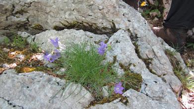 Photo: Tog je dana Velebit bio pun tek procvalog cvijeća