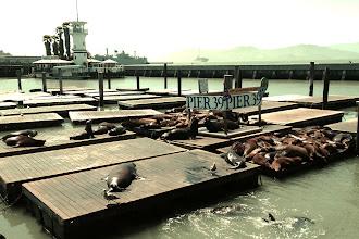 Photo: Pier 39's sea lions